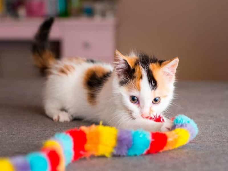 Kedi Kumu Alışverişlerinizi Online Yapın
